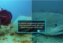 Dikhuatiri Terjerut Tali, Penyelam Skuba Kongsi Pengalaman Berdepan Bangkai Jerung Di Laut