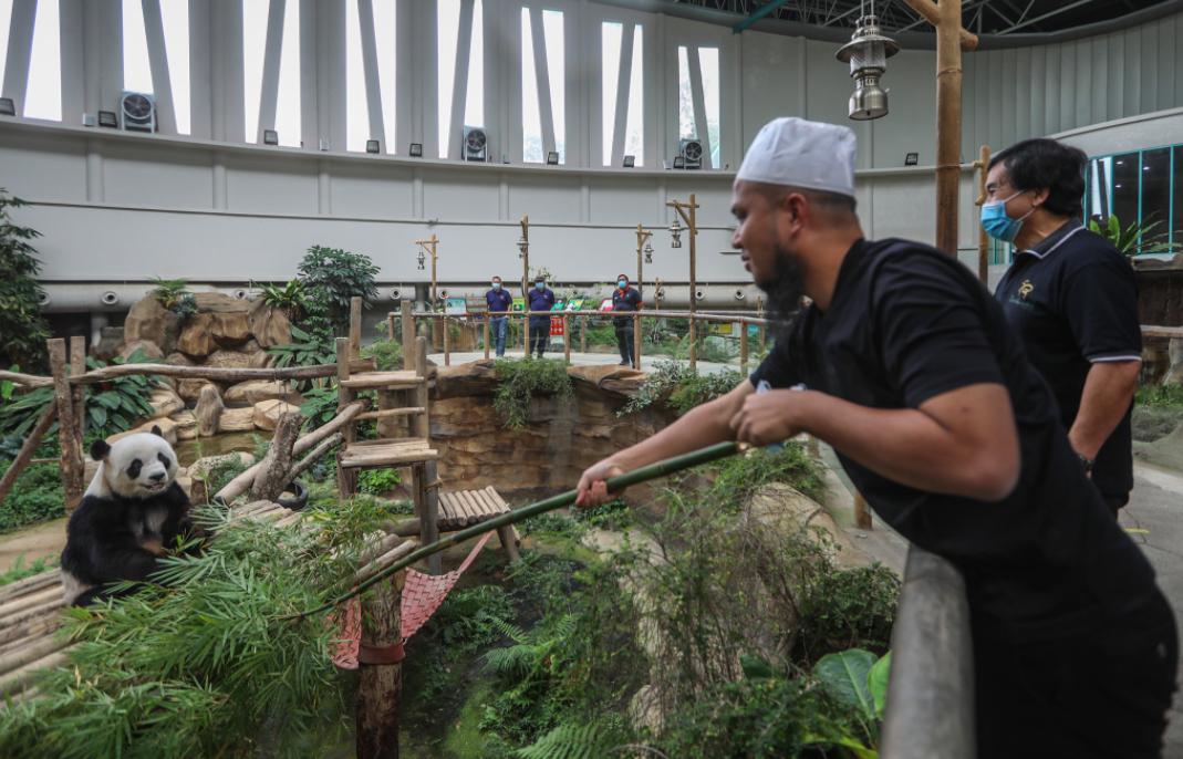 Ebit Lew Sumbang 200kg Daging Segar Kepada Zoo Negara