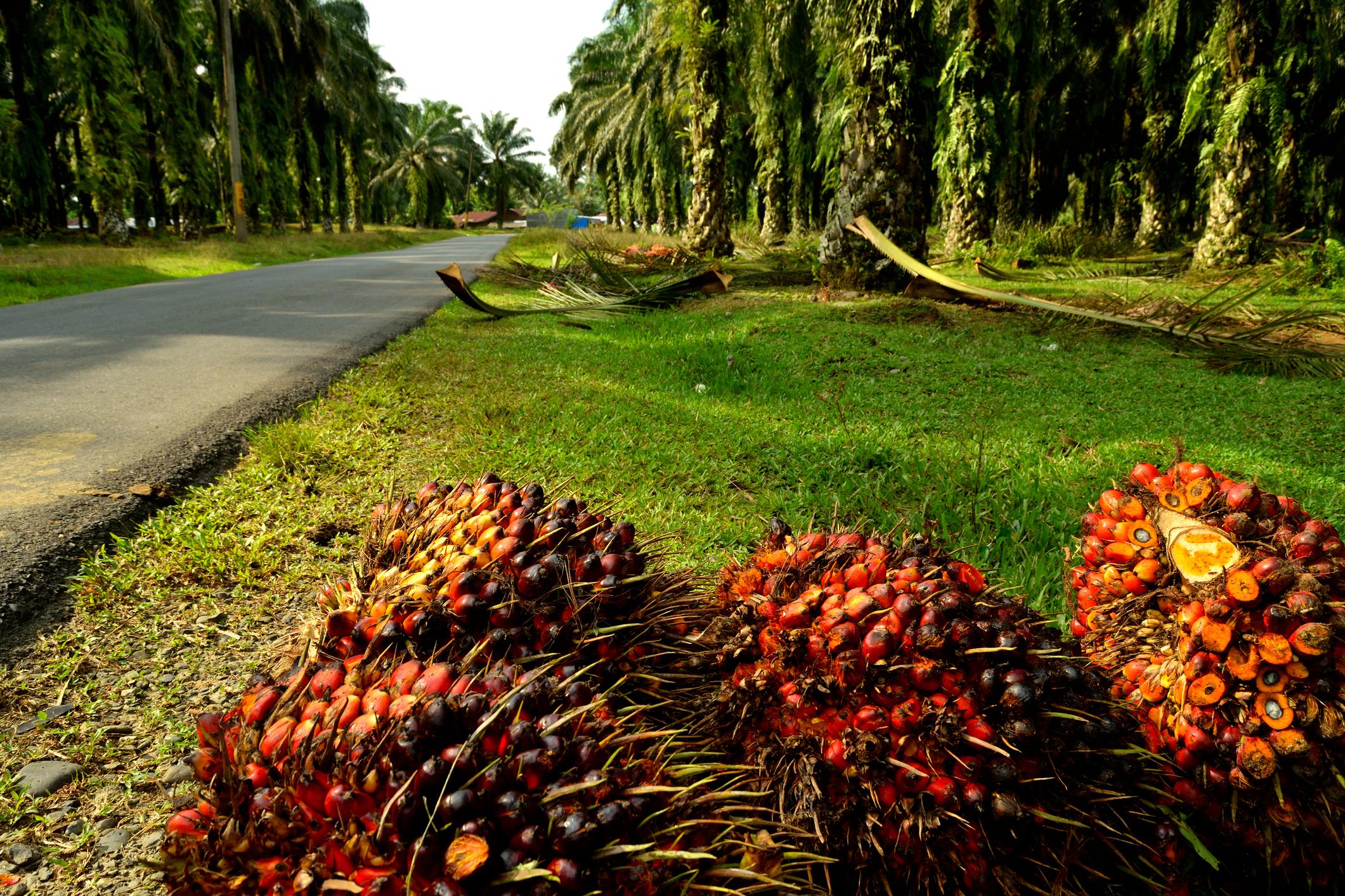 4 Perkara Tentang Industri Perladangan Malaysia Yang Mengejutkan
