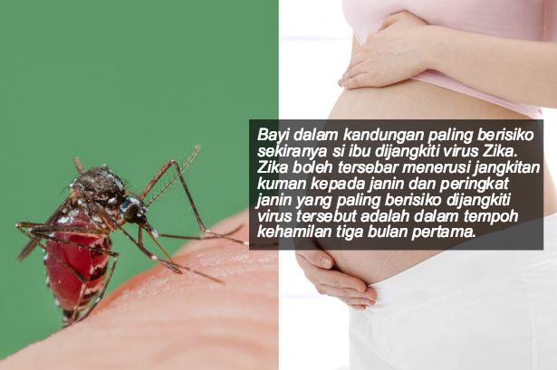 zika1.1